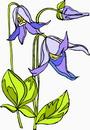 花朵鲜花_207