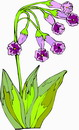花朵鲜花_211