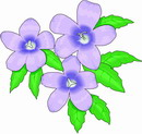 花朵鲜花_214