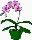 花朵鲜花_216