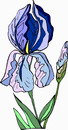 花朵鲜花_218
