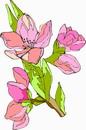花朵鲜花_219