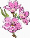 花朵鲜花_221