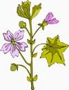 花朵鲜花_245