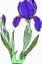 花朵鲜花_273