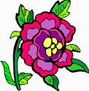 花朵鲜花_279