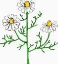 花朵鲜花_280