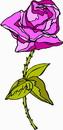 花朵鲜花_281