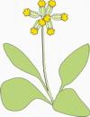 花朵鲜花_282
