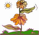 花朵鲜花_285