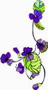 花朵鲜花_289