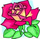 花朵鲜花_291