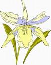 花朵鲜花_294