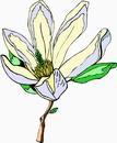 花朵鲜花_295