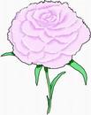 花朵鲜花_296