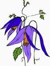 花朵鲜花_297