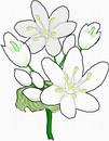 花朵鲜花_298