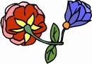 花朵鲜花_307
