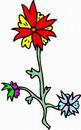 花朵鲜花_308