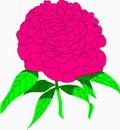 花朵鲜花_310