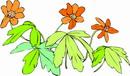 花朵鲜花_322