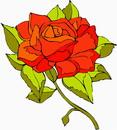 花朵鲜花_325