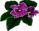 花朵鲜花_329