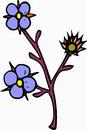 花朵鲜花_334