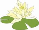 花朵鲜花_339