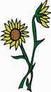 花朵鲜花_342