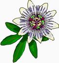 花朵鲜花_345