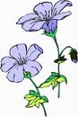 花朵鲜花_346