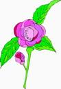 花朵鲜花_350