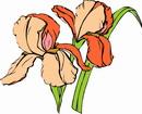 花朵鲜花_351