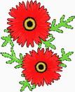 花朵鲜花_355