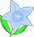 花朵鲜花_361