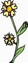 花朵鲜花_363
