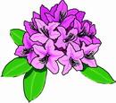 花朵鲜花_366