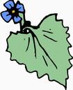 花朵鲜花_368