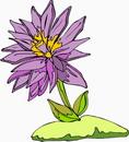花朵鲜花_371