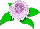 花朵鲜花_379