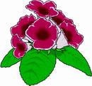 花朵鲜花_382