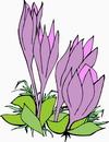 花朵鲜花_386
