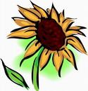花朵鲜花_387