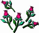 花朵鲜花_388