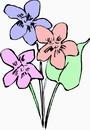 Flowers flowers _619