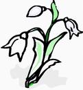 花朵鲜花_736