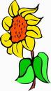 花朵鲜花_741