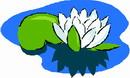 花朵鲜花_742