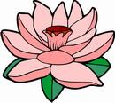 花朵鲜花_744